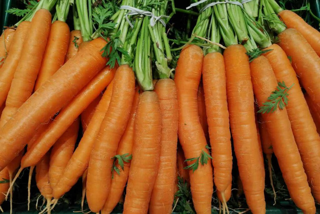 A pile of long and straight carrots